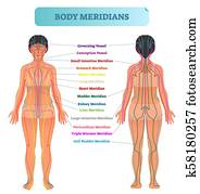 Body meridian system vector illustration scheme, Chinese energy acupuncture therapy diagram chart.