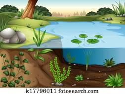 a, teich, ecosytem