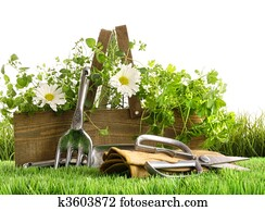 Fresh herbs in wooden box on grass