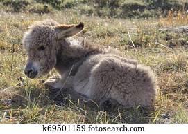 Geliebte Zwerg Esel Fohlen Wiese Fotos | 195 Zwerg Esel Fohlen Wiese Stock #PN_61