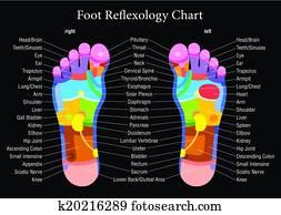 Foot reflexology chart black descri