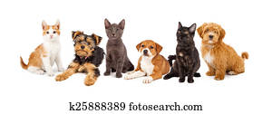 Row of Puppies and Kittens