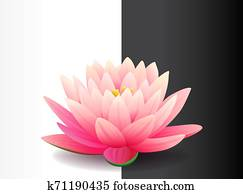 Beautiful realistic pink lotus flower isolated on black and white background, water plant, vector illustration.