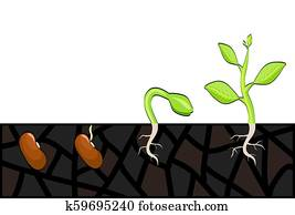 Plant growth stages from seed to sprout. Vector illustration, eps 10