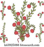 Vector colored illustration with branches of cranberries