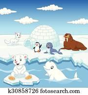 arctics, tiere, sammlung, satz