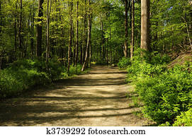 Hiking path through a forest