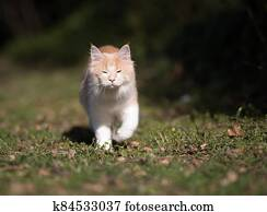 cat walking on lawn blinded by sunlight