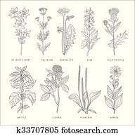 Medical Herbs Vector Set. Hannddrawn Style