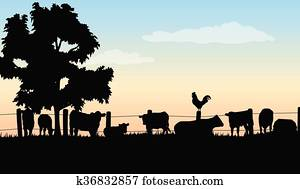 ranch, silhouetten