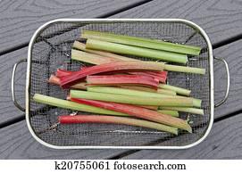 Rhubarb in a basket