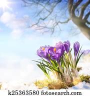 art spring flowers