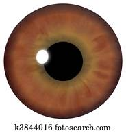Brown Eye Iris
