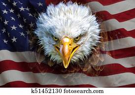 An angry north american bald eagle on american flag