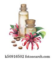 Watercolor star anise oil