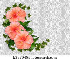 Hibiscus and lace Background