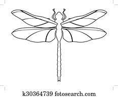 dragonfly, top view