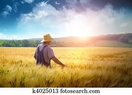 landwirt, gehende, durch, a, weizen- feld