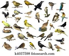 birds isolated on white (35)