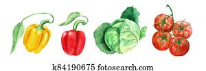 Set of vegetables: tomato, head cabbage and yellow and paprikas watercolor illustration
