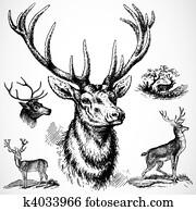 Vector Buck Deer