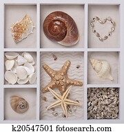 Seashells in a white box