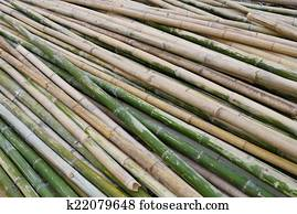 green bamboo for industry construction
