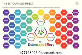 The Entourage Effect Overview horizontal business infographic