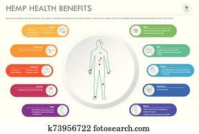 hanf, gesundheit, vorteile, horizontaler, geschaefts, infographic