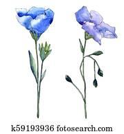 Blue flax flower. Floral botanical flower. Isolated illustration element.