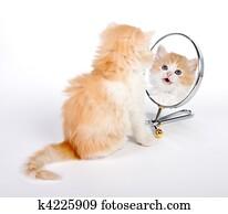 Reflected kitten