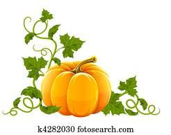 reif, orangengartenkürbis, gemüse, mit
