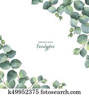 aquarell, vektor, grün, blumen-, karte, mit, silberner dollar, eukalyptus, bl?tter, und, zweige, freigestellt, wei?, hintergrund.