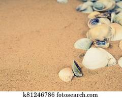 Sea shells with sand as background, Top view. Flat lay