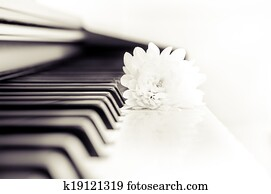 Close-up detail of piano keyboard and flower in monochrome