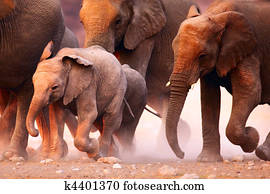 Elephants herd running
