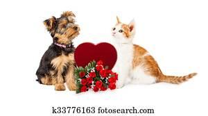 hundebaby, und, katzenbaby, feiern, valentines tag