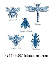 Bumble Bee, European Hoverfly, Dragonfly, Hlalactid Bee, and Lice Vintage Collection