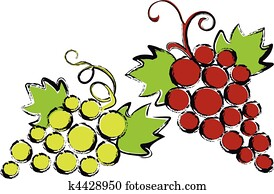 red and green grapes with vine leav