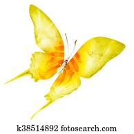 Watercolor butterfly , isolated on white