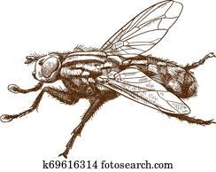 stich, abbildung, von, fliege, insekt