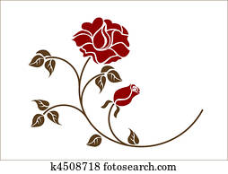 red roses on the white backgroud.