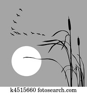 vector drawing flock geese on bulrush