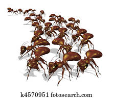 Army of Ants