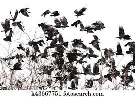 μεγάλο μαύρο πουλί συλλογή εικόνων μεγάλο καβλί κρέμα πίτα