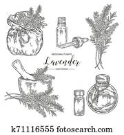 Lavender plant set. Flowers and leaves of lavender with rustic bag, mortar and glass bottle of oil. Medical herbs hand drawn. Vector botanical illustration. Engraving style
