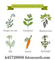 Vintage collection of hand drawn medical herbs and plants, forget-me-not, candyleaf, blackcurrant, dill, carrot, eyebright