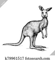 black and white engrave isolated kangaroo vector illustration