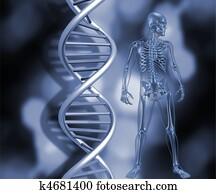 Skeleton with DNA strands