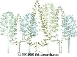 fir trees, vector